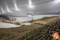 Cultivation description potatoes